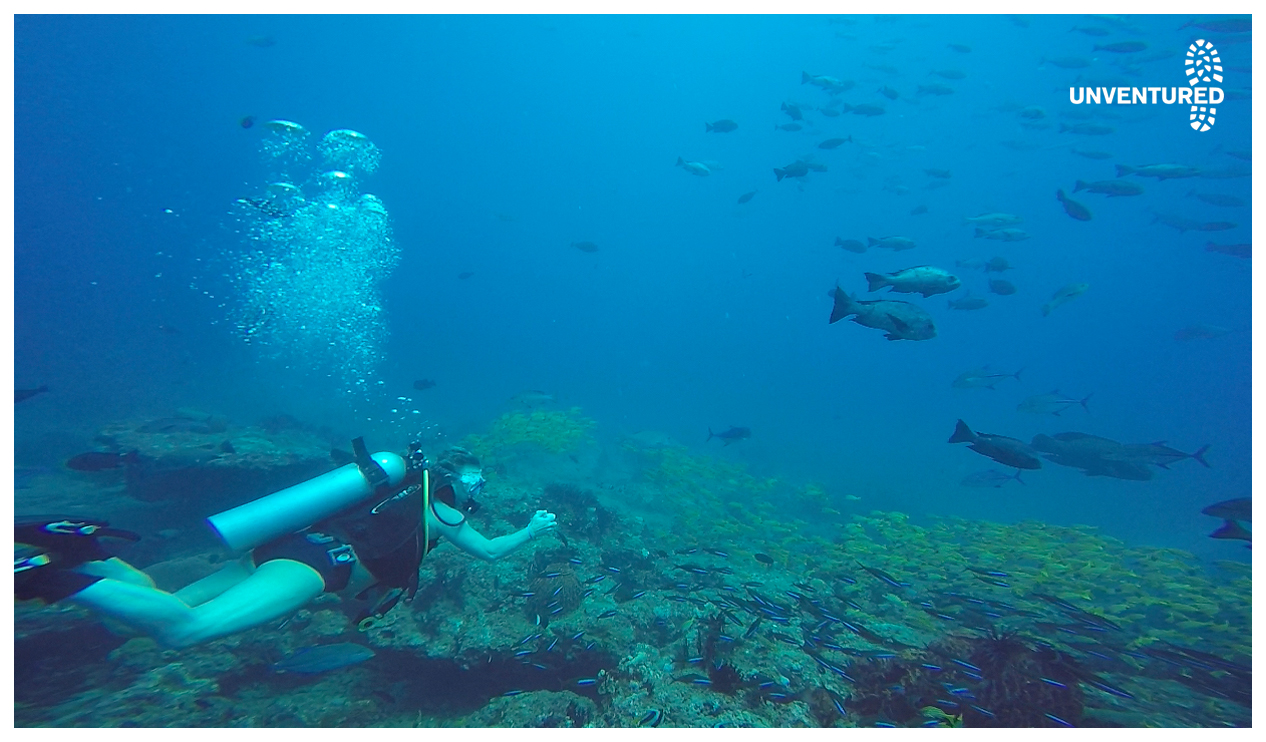 Andaman Scuba Dive Tour